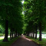 Passeio na floresta Fotos de Stock Royalty Free