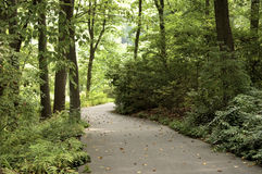 Passeio na floresta Fotografia de Stock Royalty Free