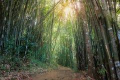 Passeio na floresta de bambu da montanha fotos de stock royalty free