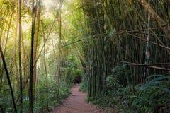 Passeio na floresta de bambu da montanha fotografia de stock royalty free