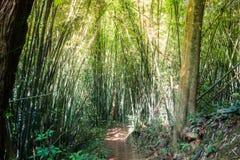 Passeio na floresta de bambu da montanha fotografia de stock