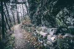 Passeio na floresta do outono, Nitra, filtro análogo imagem de stock royalty free