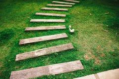 Passeio na grama verde Fotos de Stock