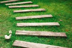 Passeio na grama verde Imagem de Stock