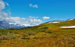 Passeio na montanha ao Guanaco de Cerro em Tierra del Fuego Imagens de Stock