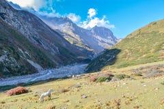 Passeio na montanha do circuito de Annapurna, Letdar Manang - região de Annapurna, Nepal fotos de stock royalty free