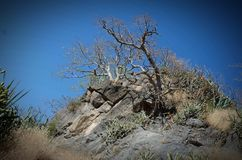 Passeio na montanha do forte de Dhodap foto de stock royalty free