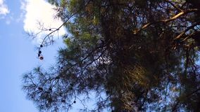 Passeio na opinião da floresta e da câmera em árvores video estoque