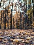 Passeio nas madeiras com as folhas de outono coloridas imagens de stock