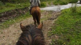 Passeio no cavalo no trajeto video estoque
