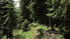Passeio no parque nacional de Borjomi Kharagauli - Geórgia das montanhas video estoque