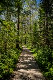 Passeio no quadro vertical da floresta do verão fotografia de stock