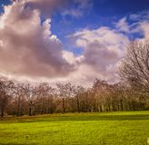 Passeio pela estrada com árvores fotografia de stock