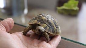 Passeio pequeno da tartaruga interno filme