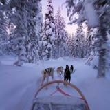 Passeio ronco do pequeno trenó no crepúsculo no país das maravilhas do inverno fotos de stock