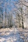 Passeio só entre diversas árvores cobertas pela geada Fotografia de Stock