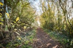 Passeio vazio visto dentro de uma área arborizada em uma reserva natural Fotos de Stock Royalty Free