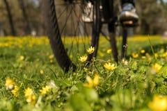 Passeios da bicicleta ao longo do caminho com flores fotos de stock royalty free