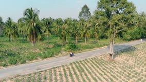 Passeios da menina ao longo da estrada asfaltada entre a floresta verde da palma vídeos de arquivo