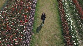 Passeios da menina em um campo da tulipa video estoque