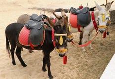 Passeios do asno na praia de Yarmouth imagens de stock royalty free
