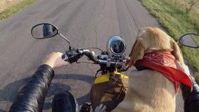 Passeios do cão de Labrador na motocicleta filme