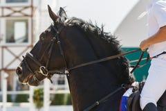 Passeios do cavaleiro em um cavalo preto que galopa em um fim do hipódromo acima imagens de stock