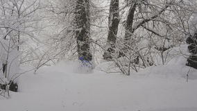 Passeios freerider do Snowboarder na floresta filme
