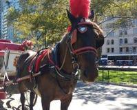 Passeios no Central Park, NYC do cavalo e do transporte, NY, EUA Imagens de Stock