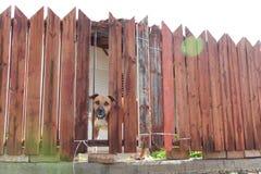 Passen Sie vom Hund auf lizenzfreies stockfoto