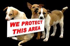 Passen Sie von den Hunden auf Lizenzfreie Stockfotos