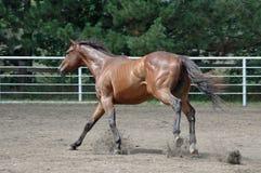 Passendes Pferd Lizenzfreie Stockfotos