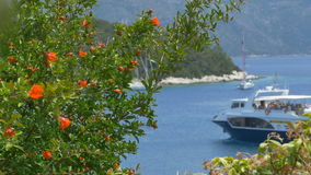 Passenger Boat and Flowers in Harbor stock footage