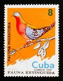 Passenger Pigeon Ectopistes migratorius, Extinct birds serie, circa 1974. MOSCOW, RUSSIA - AUGUST 29, 2017: A stamp printed in Cuba shows Passenger Pigeon Royalty Free Stock Images