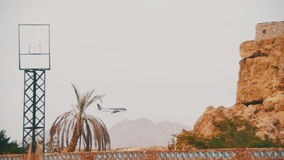 Passenger Plane in the Sky Landing on the Background of Mountains and Palm Trees in Egypt. stock video