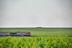 Passenger train. Agriculture in Taman. Stock Photography