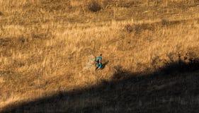 Passer par l'herbe grande Image libre de droits