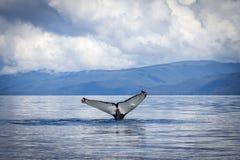 Passera della balena Immagine Stock