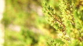 Passera kameran till och med de gröna buskarna arkivfilmer