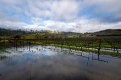 Passera stormen över Napa Valley royaltyfria foton