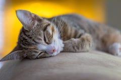Passerad ut kattunge Royaltyfri Bild