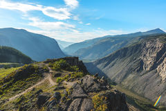 Passerande kat-yaryk i berget Altai Arkivfoton
