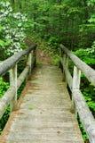 Passerella della viandante di vista ed alloro di montagna verticali Fotografie Stock