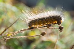 Passerella di Caterpillar Immagine Stock