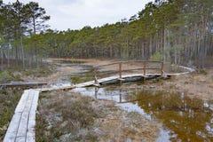 Passerella di legno alla palude Fotografia Stock Libera da Diritti