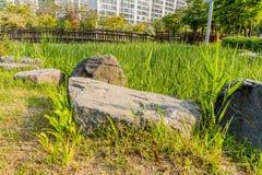 Passerella di legno canne verdi alte d'attraversamento di un'area Immagine Stock