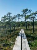 Passerella di legno e la palude con i pini della palude immagine stock libera da diritti