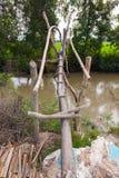 Passerella rurale dei bastoni e delle filiali di albero Fotografie Stock Libere da Diritti
