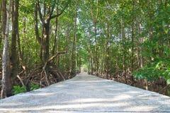 Passerelle à l'intérieur de forêt de palétuvier Image stock