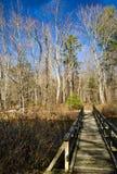 Passerelle au-dessus d'un étang de région boisée images libres de droits